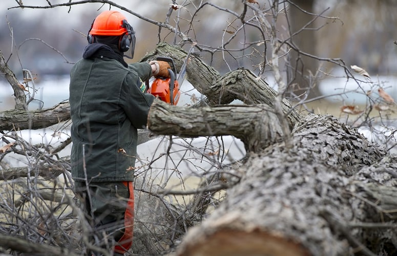 Is Tree Damaging your Property? Call Professional Arborist to Protect