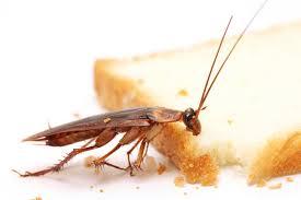Pest Control Midland