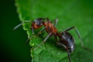 Pest Control St Kilda