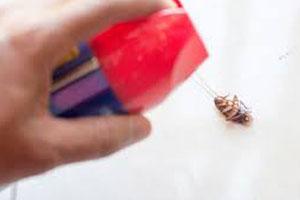 Pest Control Taringa