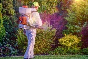 Pest Control Woollahra