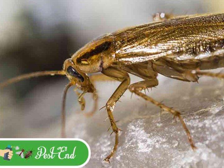 Pest End - Pest Control Perth