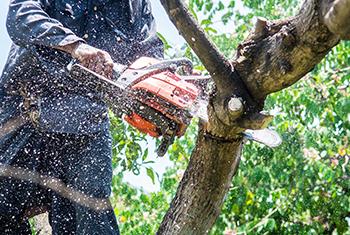 Tree maintenance near me Springwood