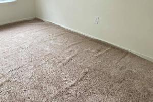 Carpet Cleaning Evatt