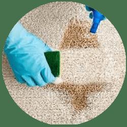Carpet Cleaning Logan