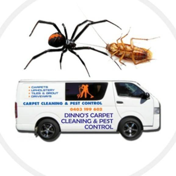 Carpet Steam Cleaner   Dinno's Carpet Cleaning & Pest Control